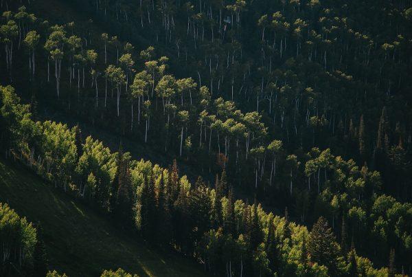 A ETMA privilegia as ações produtivas que geram menos impacto ambiental